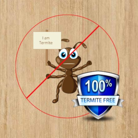 Termite Free